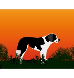 dog gazing into the distance vector image vector image