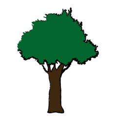 natural tree foliage plant botanical vector image