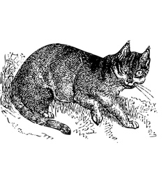Wild cat old engraving vector image vector image