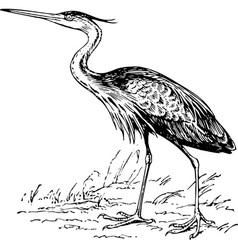 Bird ardea purpurea vector