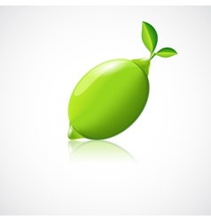 Lime fruit icon vector image