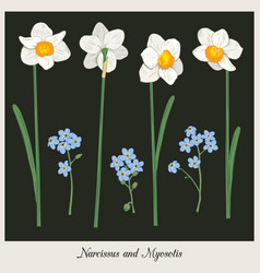 narcisus and myosotis set collection hand drawn vector image