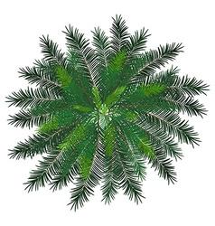 Norfolk island vector image