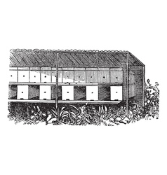 Apiary or Bee yard vintage engraving vector