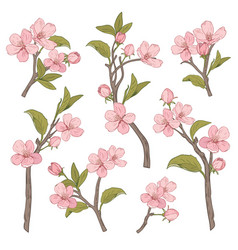 blooming tree set collection hand drawn vector image