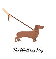 Light Brown Dachshund with a leash vector