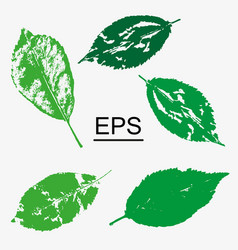 selection of forest leaves on isolated background vector image