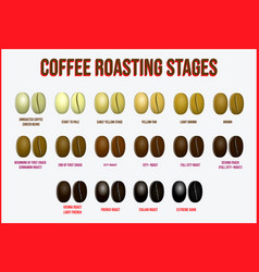 Set coffee beans realistic or various stage vector