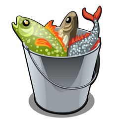 A stainless steel bucket filled with colorful fish vector