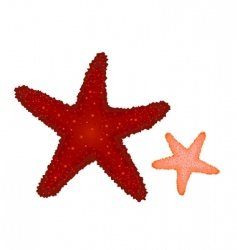 Coral starfishes vector