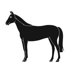 horseanimals single icon in black style vector image