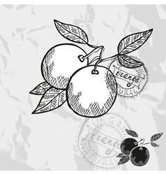 Hand drawn decorative orange fruits vector image