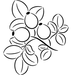 Rose-hips vector