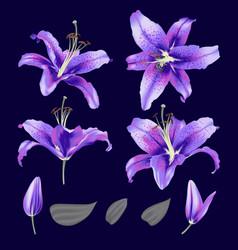 Ultraviolet lily flower blossom set vector