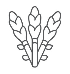 Asparagus thin line icon vegetable and organic vector