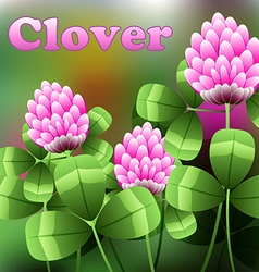 Blooming pink flowers on green field clover meadow vector