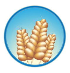 Grain wheat barley vector