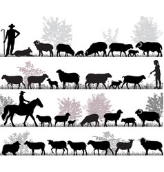 herd sheep vector image