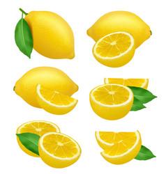 lemons realistic fruits slices citrus natural vector image