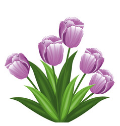 purple tulip flowers decoration vector image