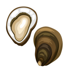 fresh opened oyster isolated of vector image