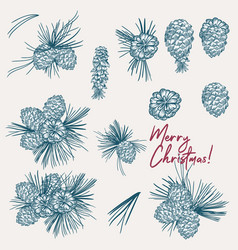 collection christmas pine tree cones vector image