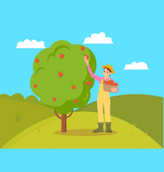 Farmer gathering apples female vector