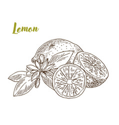 Lemons slice and flower hand drawn vector