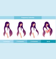 Pregnancy calendar main stages a pregnant woman vector