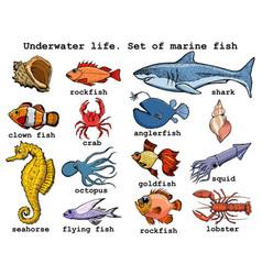 Underwater life set sea fish vector