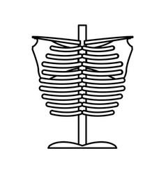 Bone chest anatomy body medical line vector