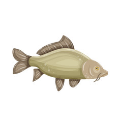 common carp isolated on white background fresh vector image