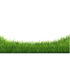 green green grass isolated white background vector image