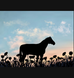 one horse stands on lawn full camomile vector image