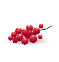 ripe red currant vector image