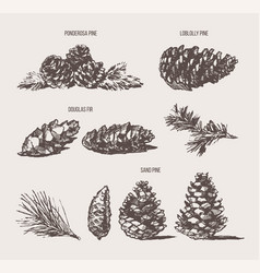 set pine cones design elements drawn sketch vector image