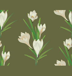 White crocus flowers vector