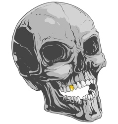 Grey skull vector image vector image