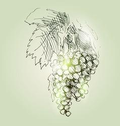 tassels grapes vector image