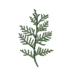 Hand drawn colorful cedar branch vector