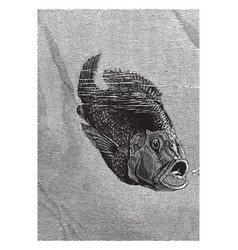 hussar fish and young vintage vector image