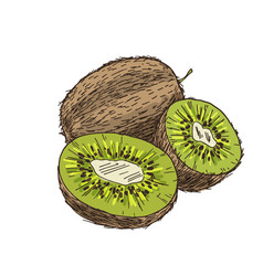 Kiwi composition with halves fruits vector