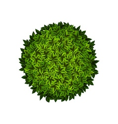 Round green bush vector