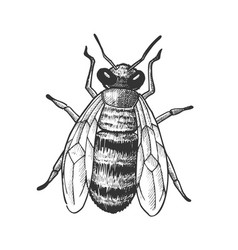 Striped bee flying insect animal top view vector