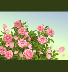 realistic pink rose 3d roses vector image