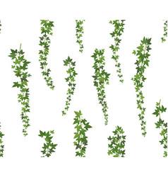 creeper green ivy wall climbing plant hanging vector image