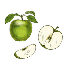 green apple with leaf and half of fruit vector image