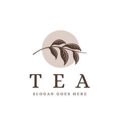 vintage tea branch logo tea plant logo icon vector image