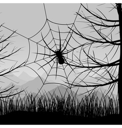 spider on a web vector image