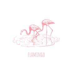 flamingo on water vector image